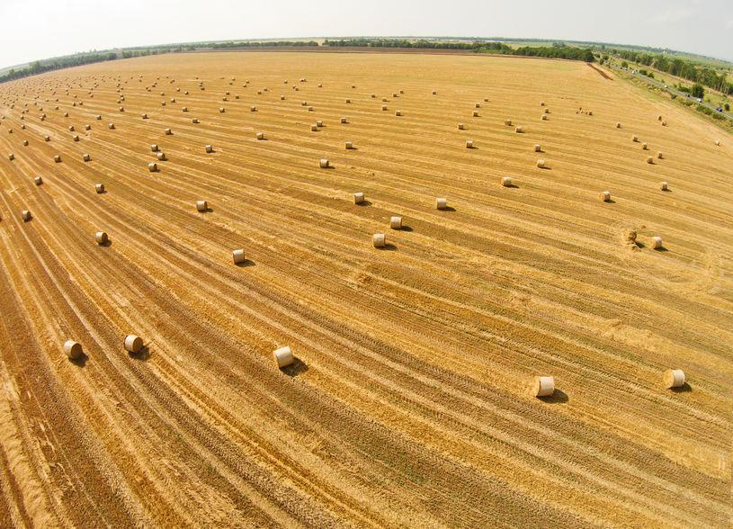 wheat bales